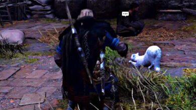 Photo of Assassin's Creed Valhalla: Pomazlete všechny kočky!